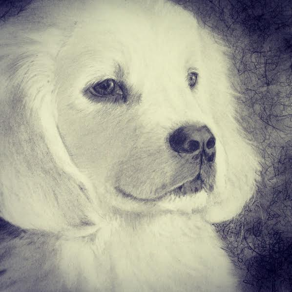 Puppy Drawing in Pencil by Diana Moore - New Zealand Artist