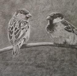 Sparrow Drawing by Diana Moore - New Zealand Artist
