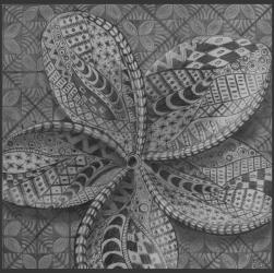 Frangipani Drawing in Pencil by Diana Moore - New Zealand Artist