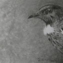 Tui Bird Drawing by Diana Moore - New Zealand Artist