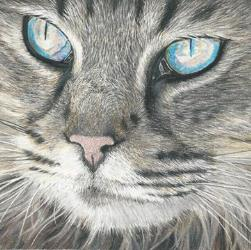 Cat Drawing in Coloured Pencil by Diana Moore - New Zealand Artist