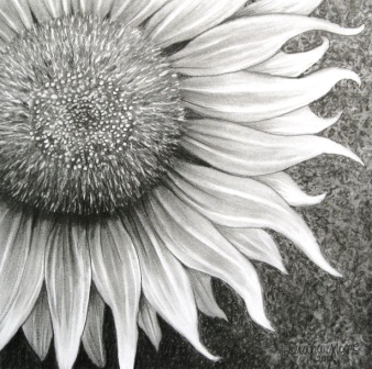 Drawings Of Sunflowers In Pencil drawings of sunflowers in